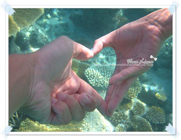 ♥蜜月♥ 馬爾地夫- 讓旱鴨子變身為美人魚的海底世界(上)
