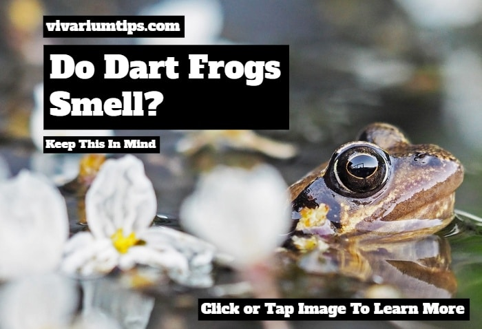 do dart frogs smell