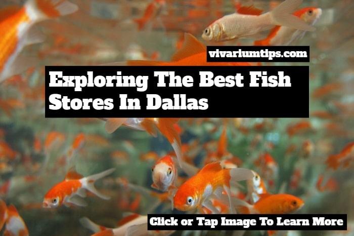 fish stores in dallas