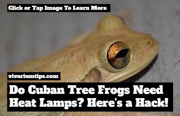 do cuban tree frogs need heat lamps