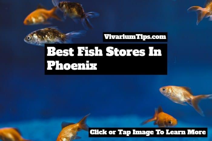 best fish stores in phoenix