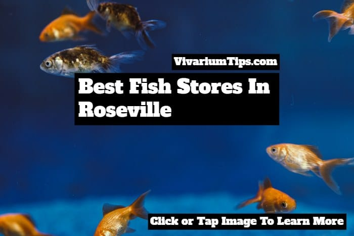 best fish stores in roseville