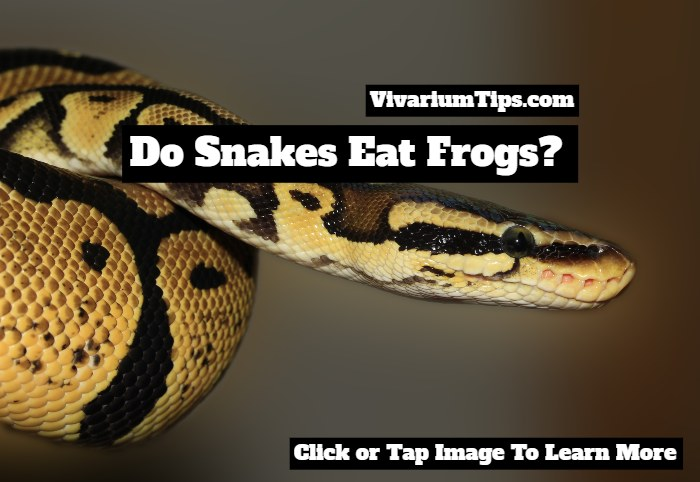 do snakes eat frogs