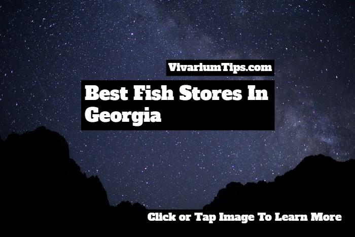 fish stores in georgia