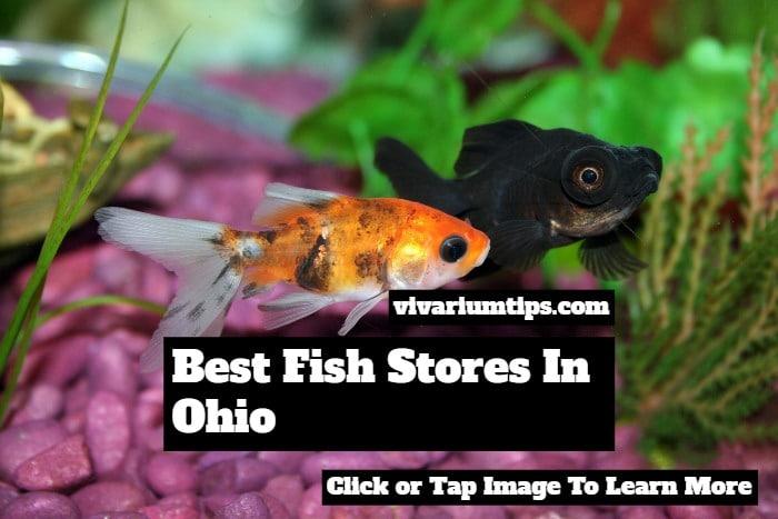 fish stores in ohio