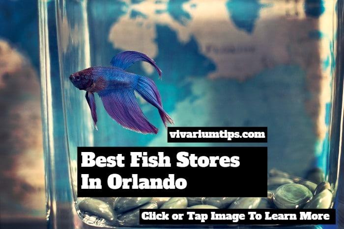 fish stores in orlando