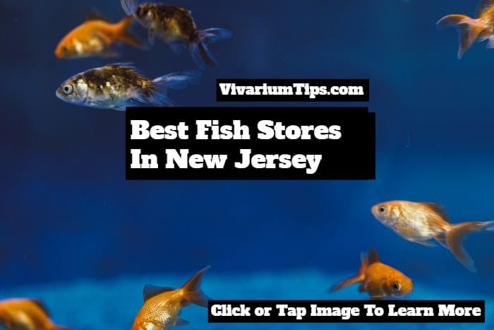 best fish stores in new jersey