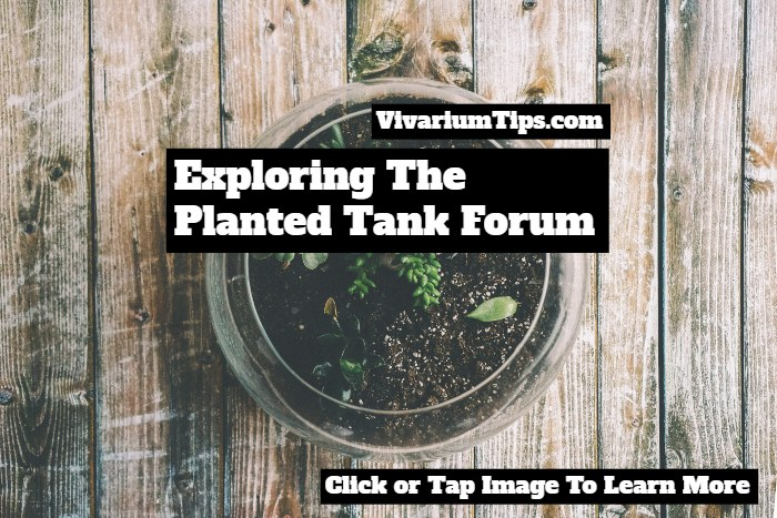 the planted tank forum