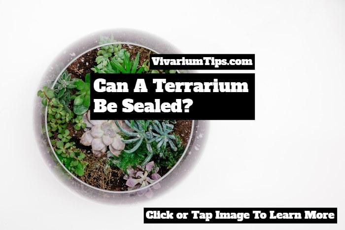 Can A Terrarium Be Sealed