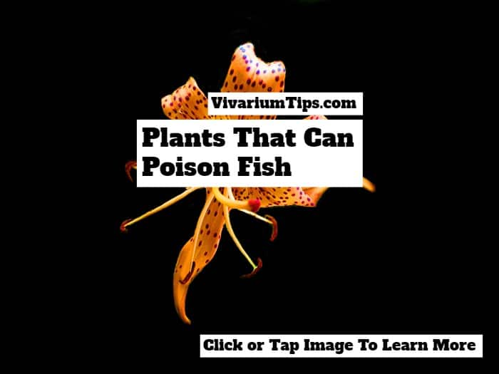 Plants That Can Poison Fish