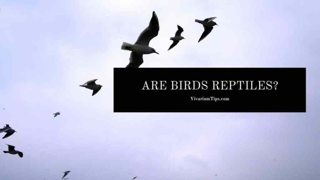 Are Birds Reptiles