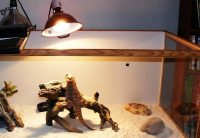 What is the Right Temperature for Bearded Dragons ...