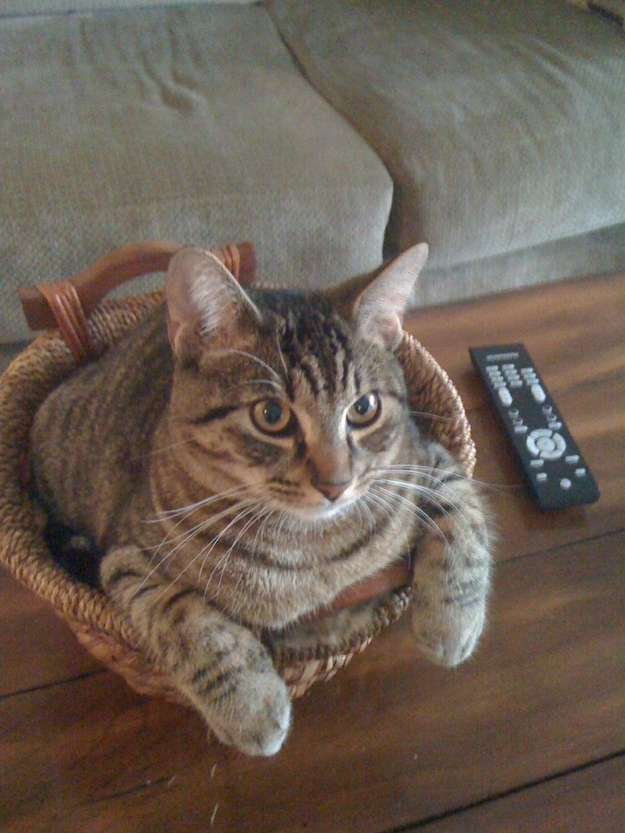 In another basket
