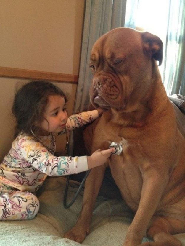 This patient pup that will play doctor to amuse this little girl.