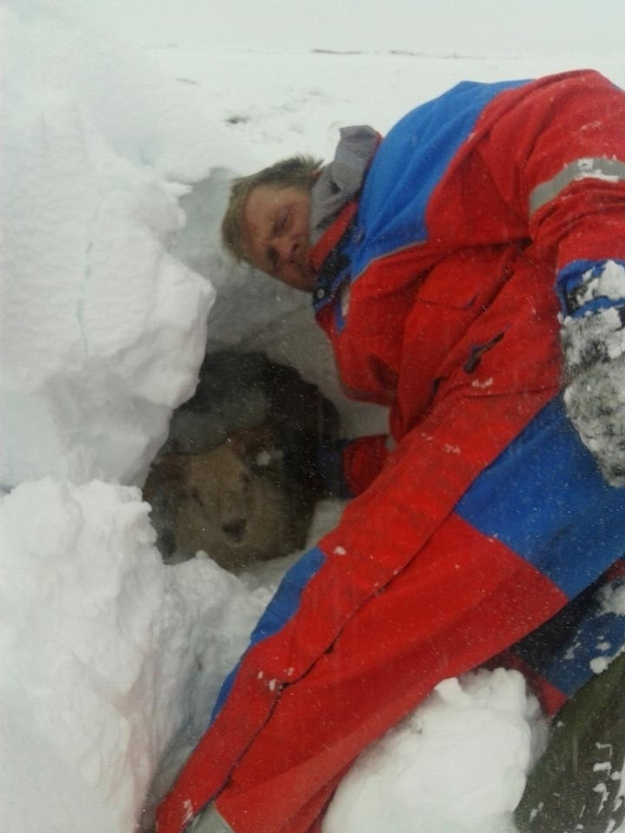 The Icelandic heroes who rescued sheep during a major snowstorm