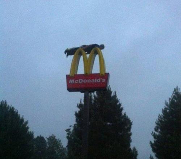 This dude planking on a McDonald's sign.