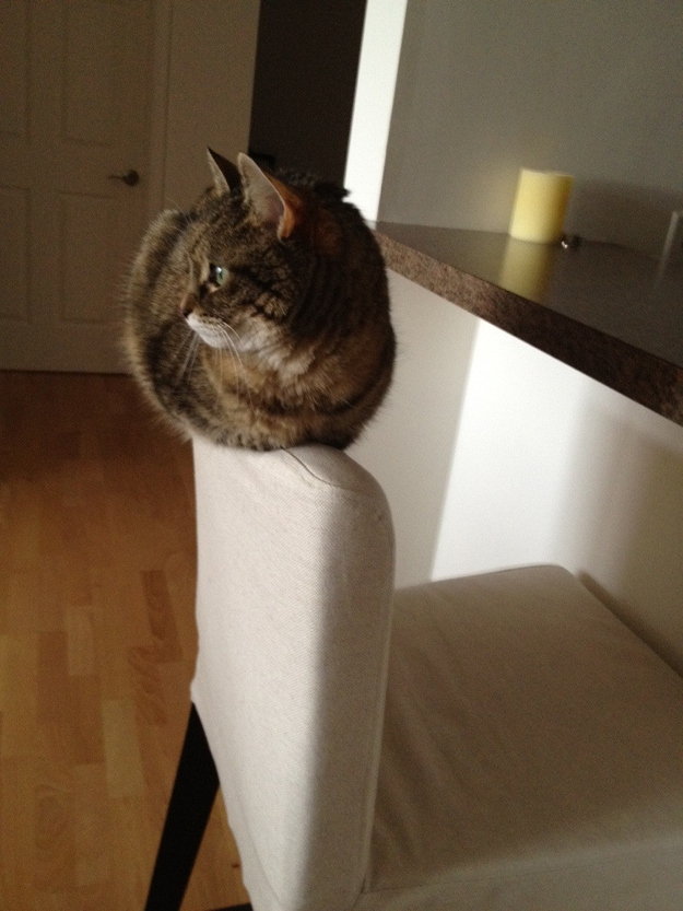 On top of a chair