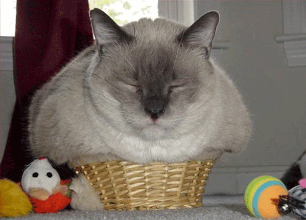 In a tiny basket