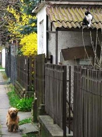 The cat who always waits for her dog best friend to pick her up for their daily stroll.