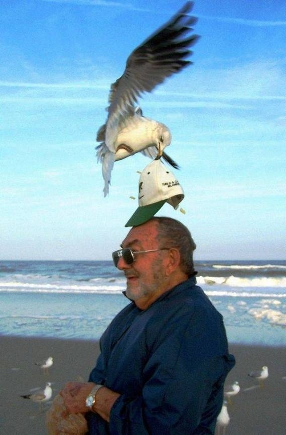 The perfectly timed seagull shoplifting photo: