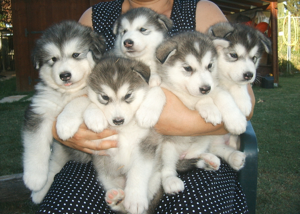 An armful of puppies