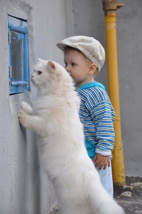 This little boy and his cat companion