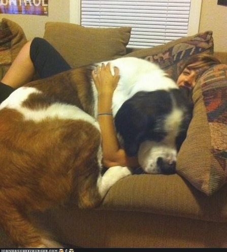 This dog who is definitely hogging the couch.