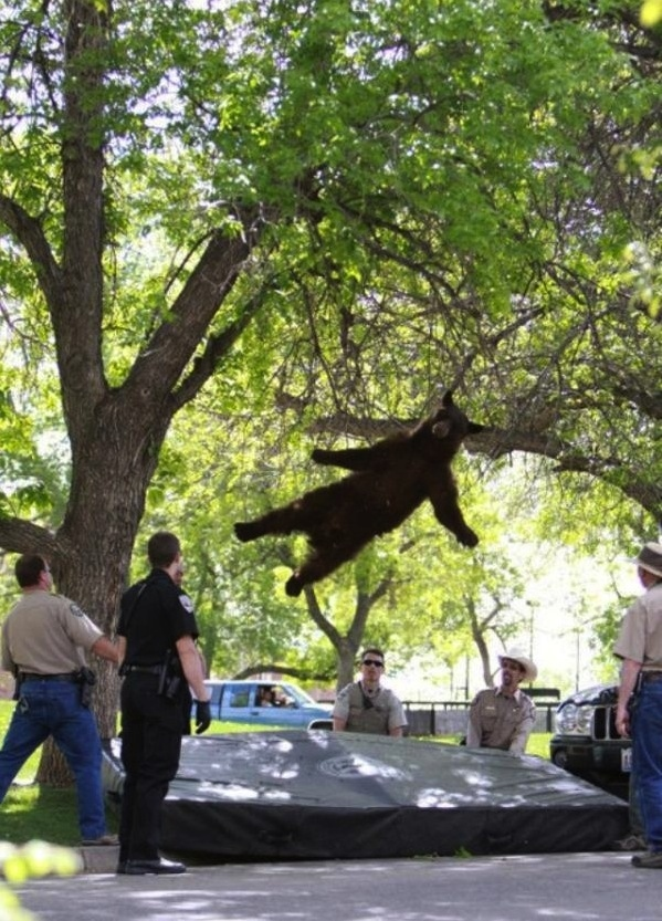 The perfectly timed bear skydive photo: