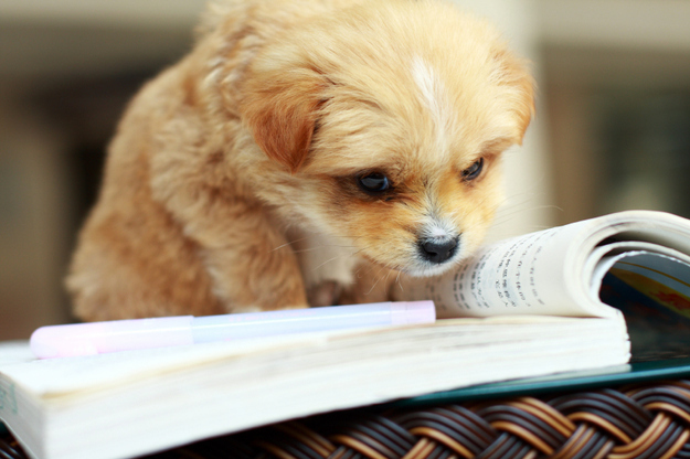The Puppy Who's Reading At Three Times Age-Level