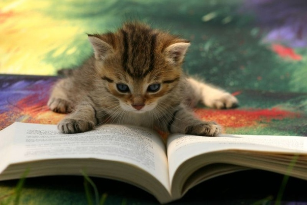 The Kitten Who Doesn't Rely On Wikipedia For Everything