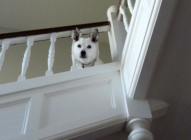 Stuck in staircase banister