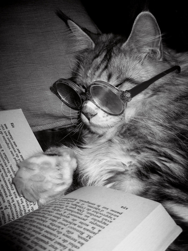 The Cat Who Reads At Night Under The Covers With A Flashlight