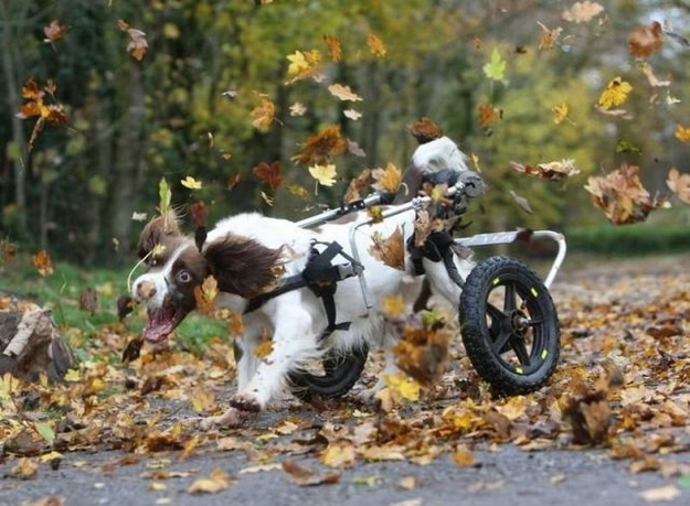 This disabled dog who loves leaves SO MUCH