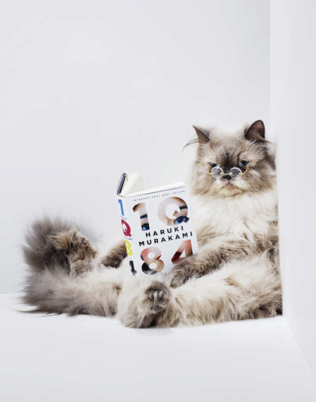 The Cat Who Knows The Librarians By Name