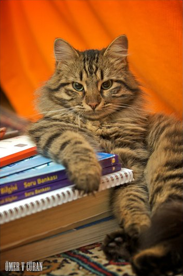 The Cat Who Spent All Her Allowance On Stationery