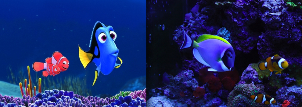 """Finding Nemo"" - Marlin, Nemo and Dory"