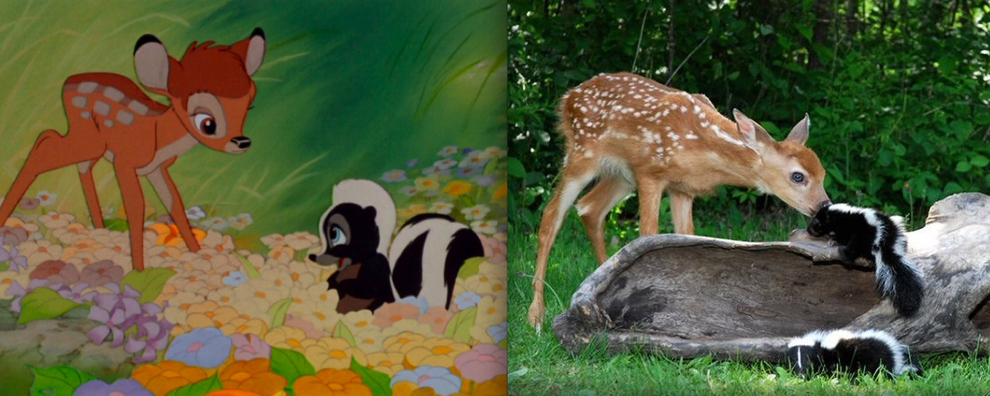 """Bambi"" - Bambi and Flower"