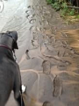 Slippery and sticky mud.