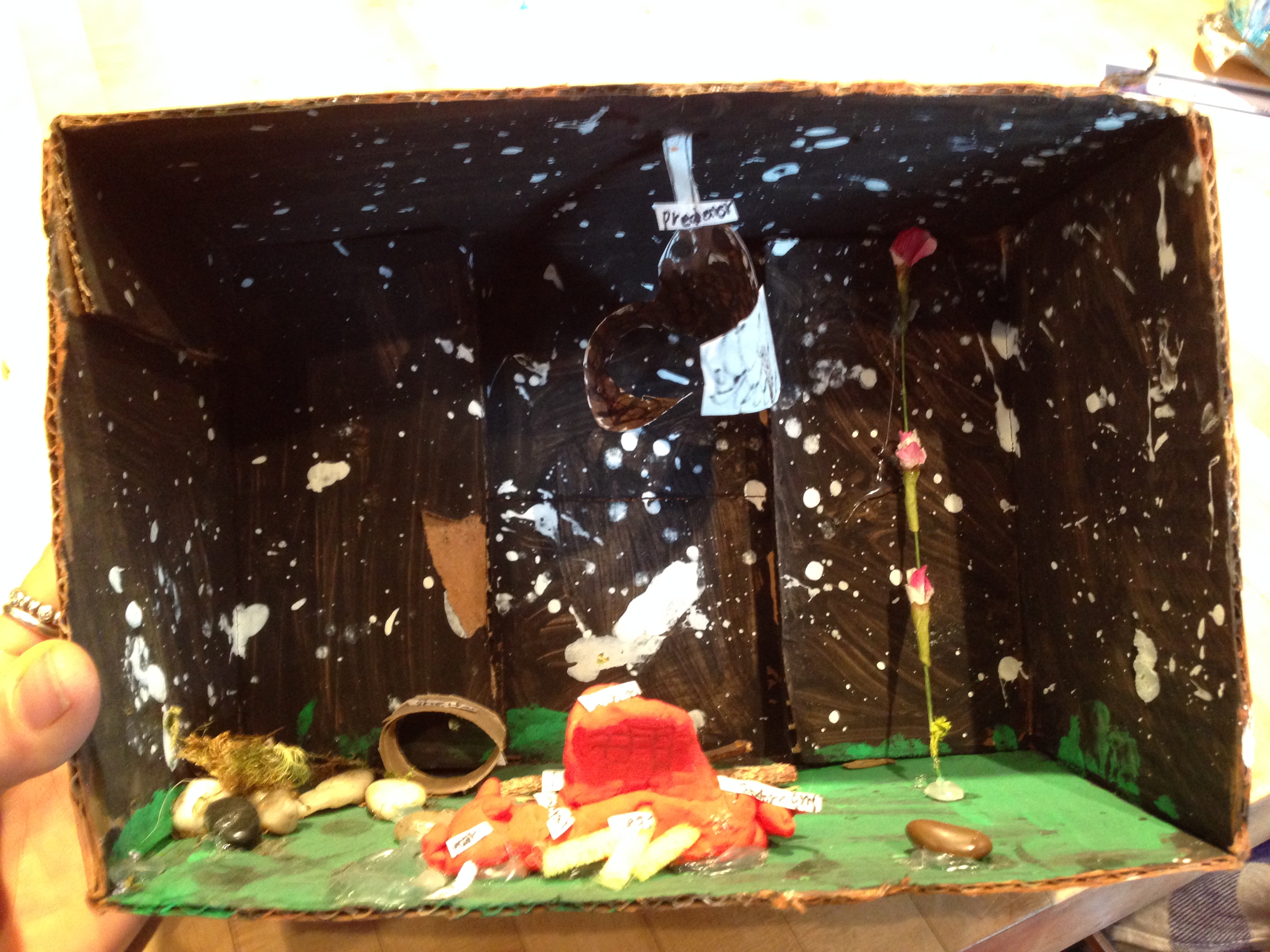 "Scrotus made this insect habitat diorama. It's occupied a very visible spot for several months. I took lots of pictures and am going to ""retire"" it."