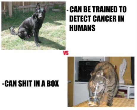 dogs-vs-cats