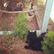 """""""Guarding"""" the chickens"""