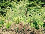 Snaky ferns