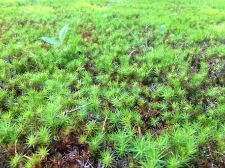 Chris calls it star grass, although it's not really grass