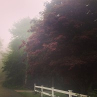 """My dad said, """"You have to be at least 10 to enjoy fog."""""""