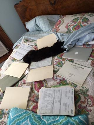 Cats are naturally helpful