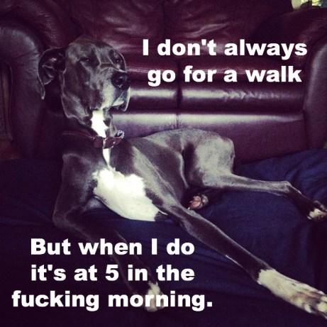 dos equis dog