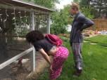 Chicken coop tour