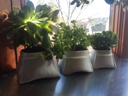 My new planters in situ