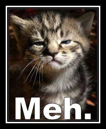 meh-cat.jpg