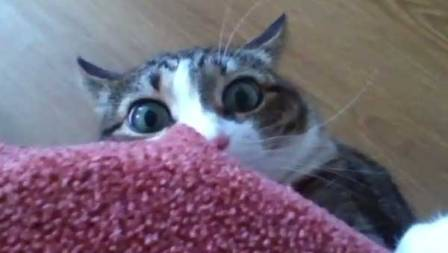 freaked-out-cat